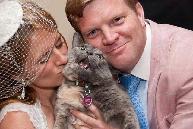 matrimonio-col-gatto-quando-le-nozze-si-fanno-graffianti-Photo-credit Luciana Justice Photography