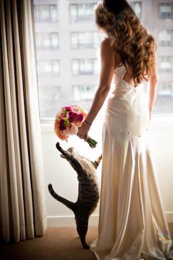 matrimonio-col-gatto-quando-le-nozze-si-fanno-graffianti-The-Observatory