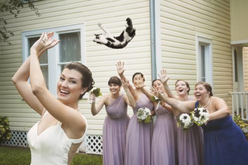 matrimonio-col-gatto-quando-le-nozze-si-fanno-graffianti-lancio del gatto2