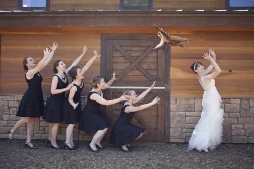 matrimonio-col-gatto-quando-le-nozze-si-fanno-graffianti-lancio del gatto